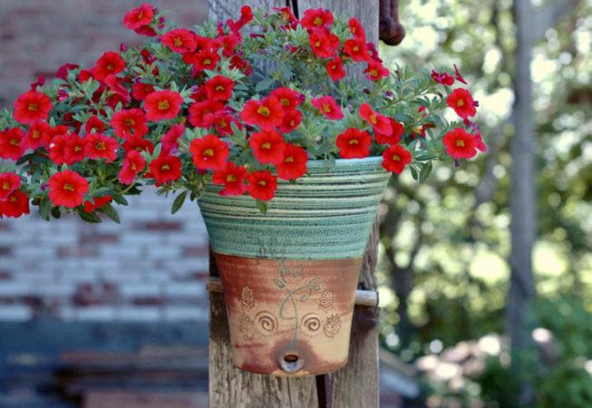 Eine hübsche Bepflanzung mit einer roten Blume in einem grünen Wandhängetopf